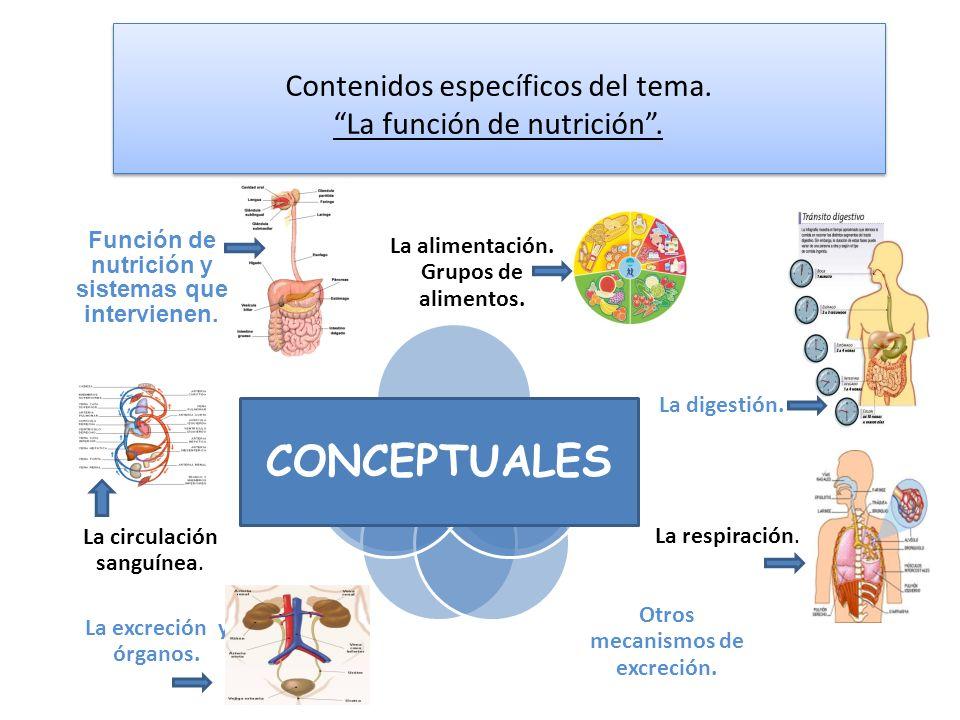 Contenidos específicos del tema. La función de nutrición. La alimentación. Grupos de alimentos. La digestión. La respiración. Otros mecanismos de excr