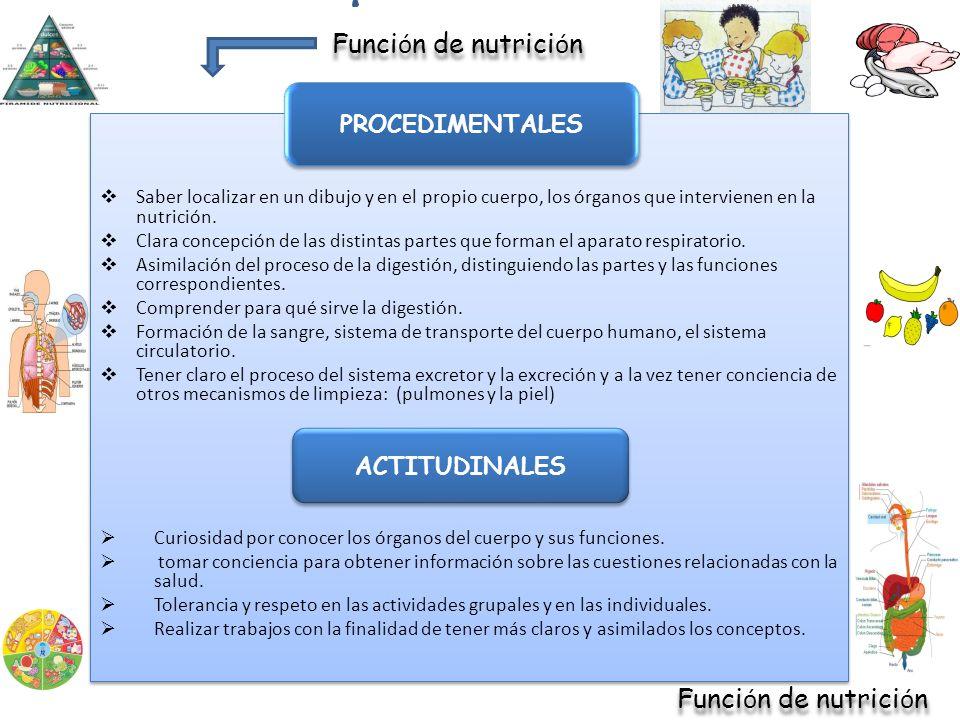 Saber localizar en un dibujo y en el propio cuerpo, los órganos que intervienen en la nutrición. Clara concepción de las distintas partes que forman e