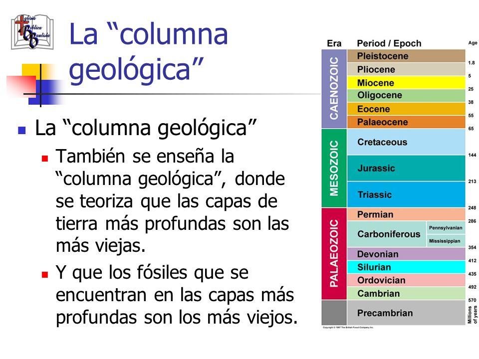 La columna geológica También se enseña la columna geológica, donde se teoriza que las capas de tierra más profundas son las más viejas. Y que los fósi