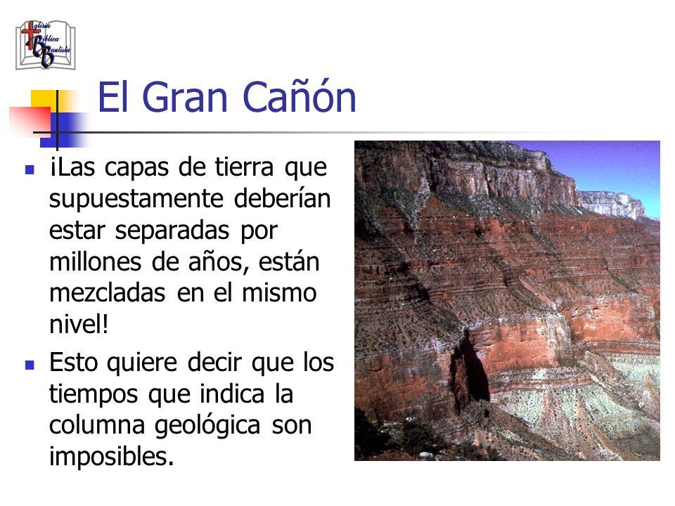 El Gran Cañón ¡Las capas de tierra que supuestamente deberían estar separadas por millones de años, están mezcladas en el mismo nivel! Esto quiere dec