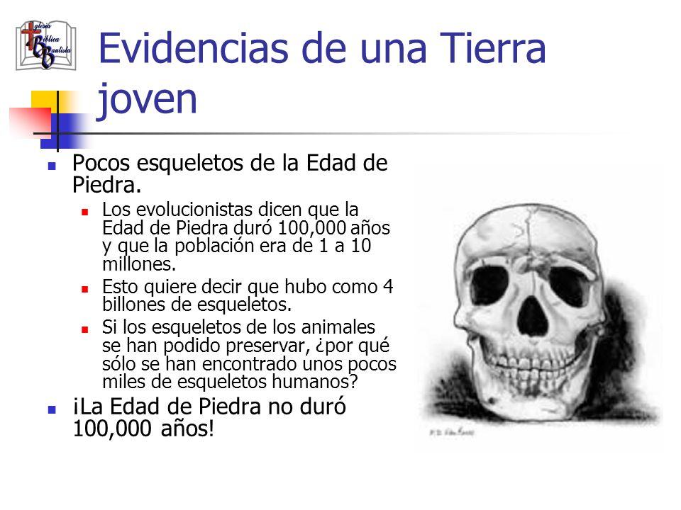 Evidencias de una Tierra joven Pocos esqueletos de la Edad de Piedra. Los evolucionistas dicen que la Edad de Piedra duró 100,000 años y que la poblac