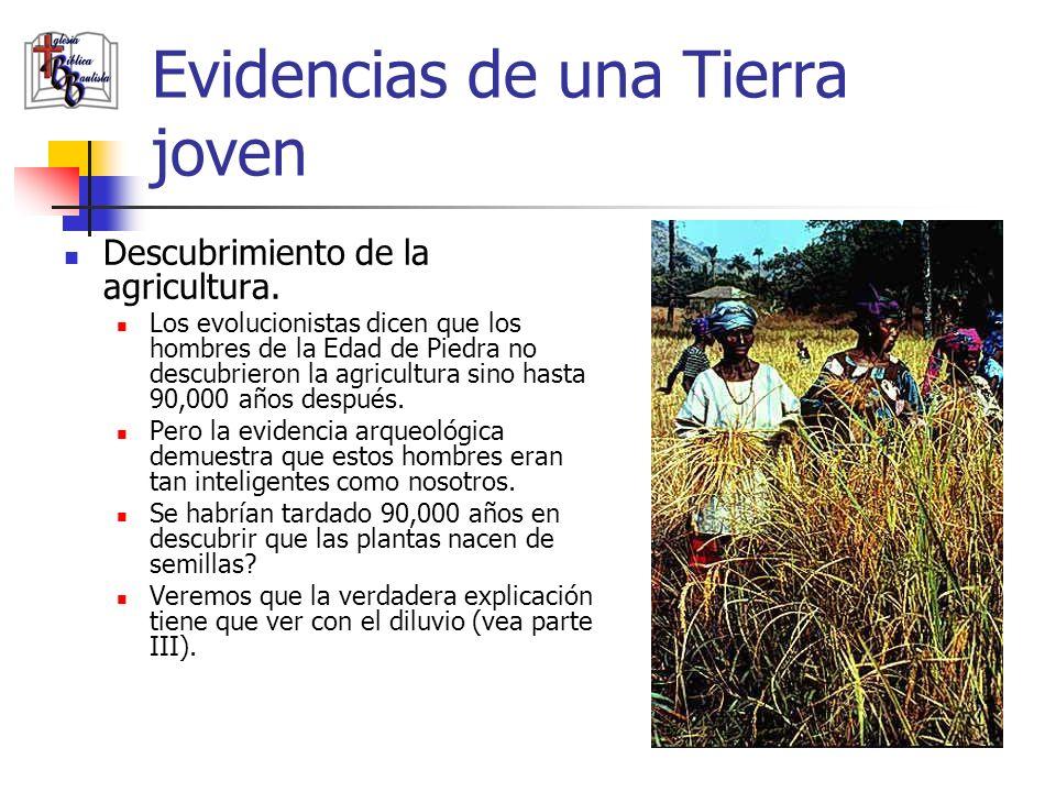 Evidencias de una Tierra joven Descubrimiento de la agricultura. Los evolucionistas dicen que los hombres de la Edad de Piedra no descubrieron la agri