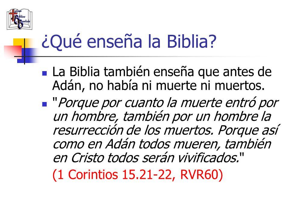 ¿Qué enseña la Biblia? La Biblia también enseña que antes de Adán, no había ni muerte ni muertos.