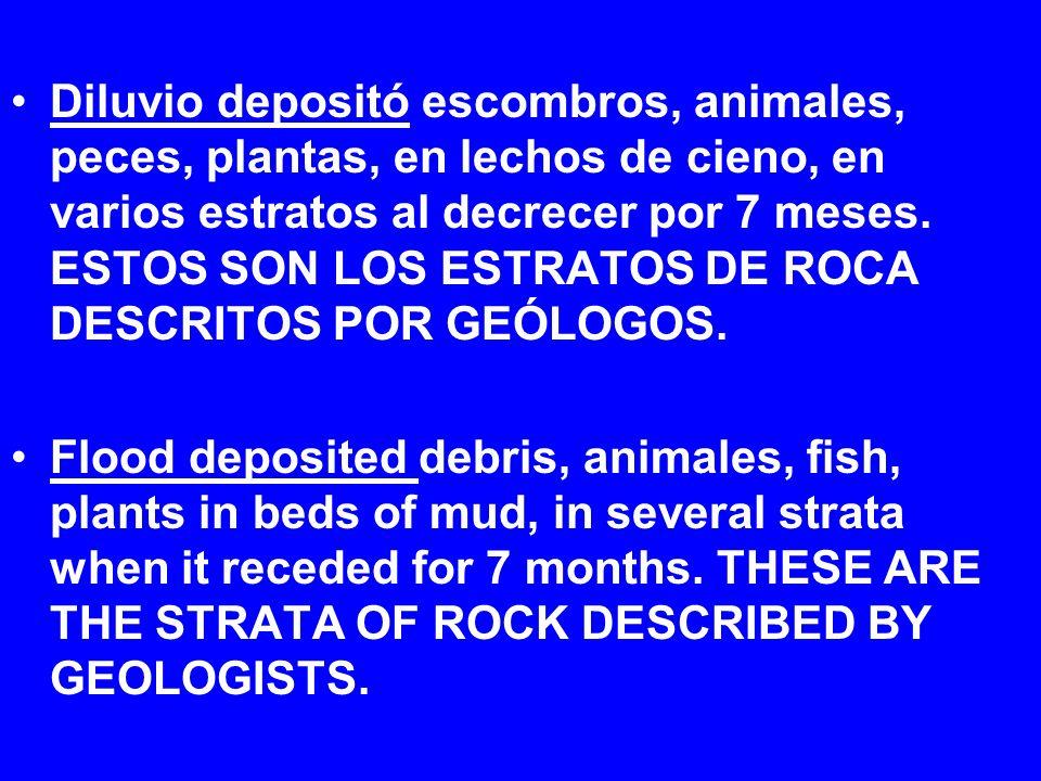 Diluvio depositó escombros, animales, peces, plantas, en lechos de cieno, en varios estratos al decrecer por 7 meses. ESTOS SON LOS ESTRATOS DE ROCA D