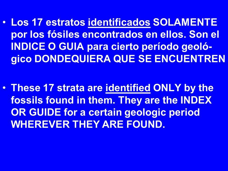 Los 17 estratos identificados SOLAMENTE por los fósiles encontrados en ellos. Son el INDICE O GUIA para cierto período geoló- gico DONDEQUIERA QUE SE