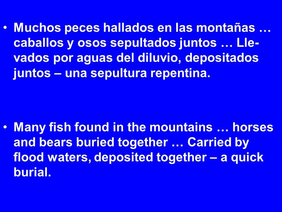 Muchos peces hallados en las montañas … caballos y osos sepultados juntos … Lle- vados por aguas del diluvio, depositados juntos – una sepultura repentina.