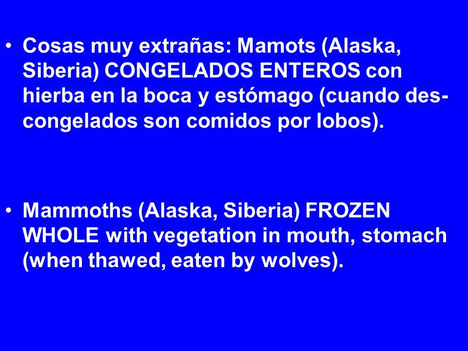 Cosas muy extrañas: Mamots (Alaska, Siberia) CONGELADOS ENTEROS con hierba en la boca y estómago (cuando des- congelados son comidos por lobos).