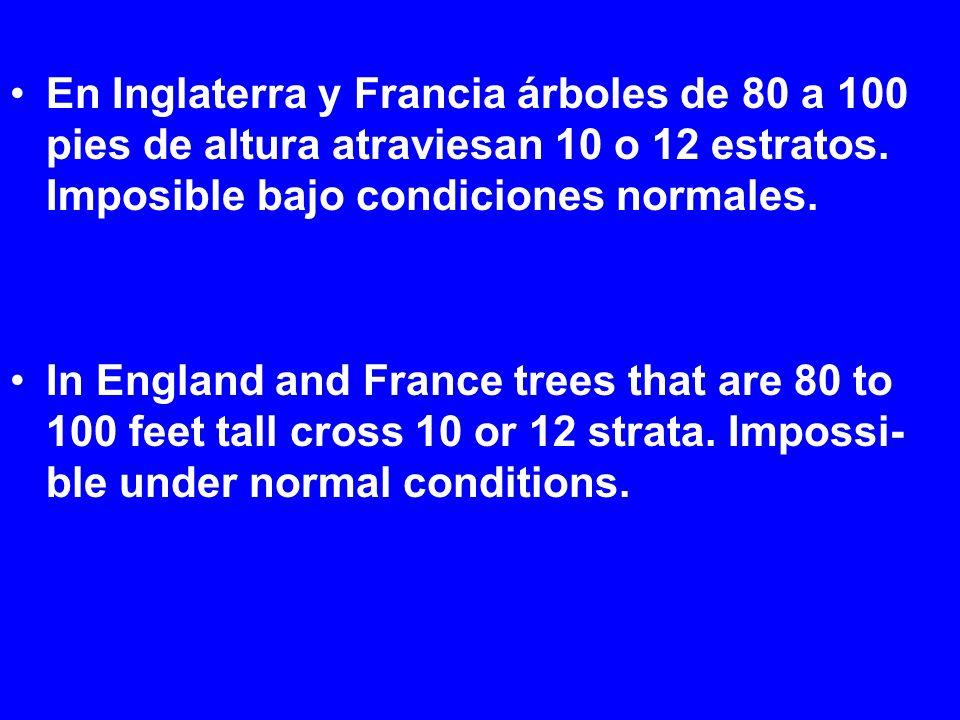 En Inglaterra y Francia árboles de 80 a 100 pies de altura atraviesan 10 o 12 estratos. Imposible bajo condiciones normales. In England and France tre