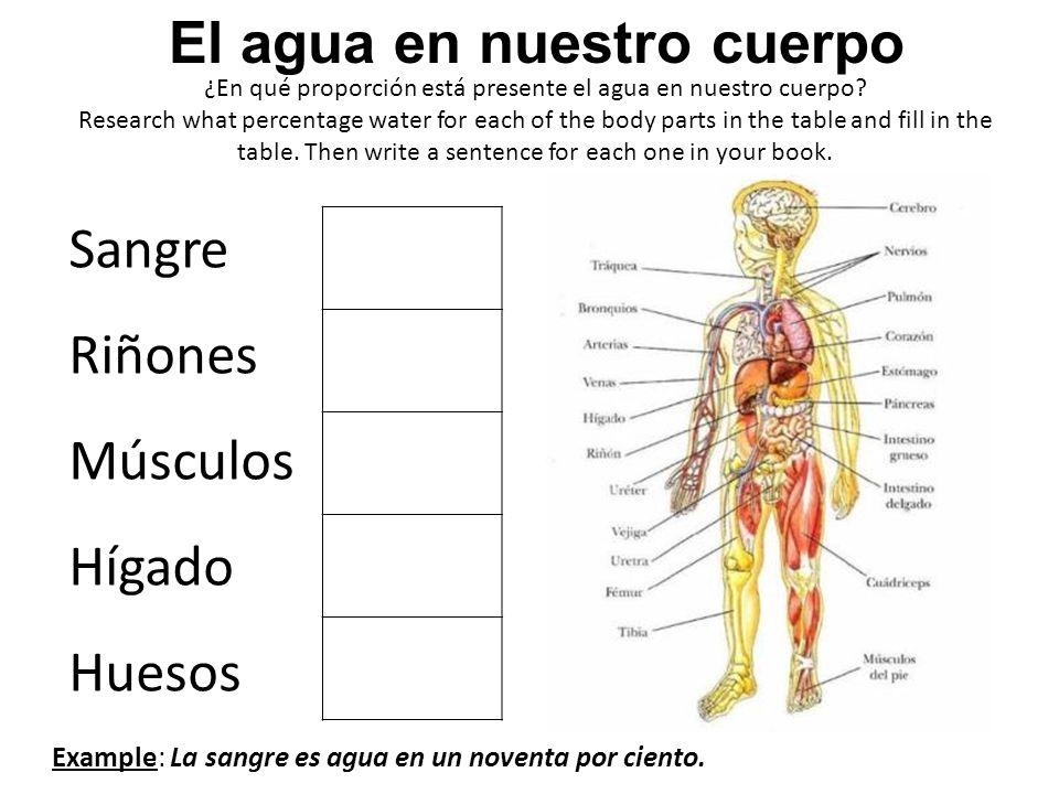 ¿En qué proporción está presente el agua en nuestro cuerpo? Research what percentage water for each of the body parts in the table and fill in the tab