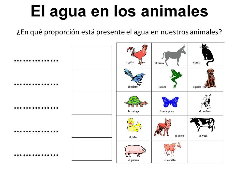 ¿En qué proporción está presente el agua en nuestros animales? …………… El agua en los animales