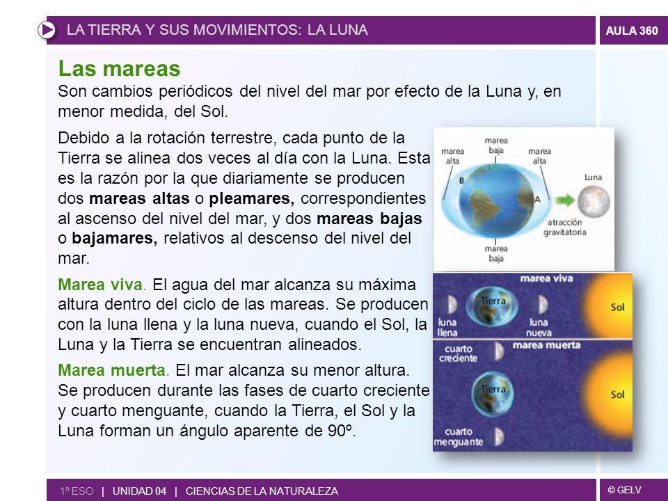 © GELV AULA 360 1º ESO | UNIDAD 04 | CIENCIAS DE LA NATURALEZA Las mareas Debido a la rotación terrestre, cada punto de la Tierra se alinea dos veces