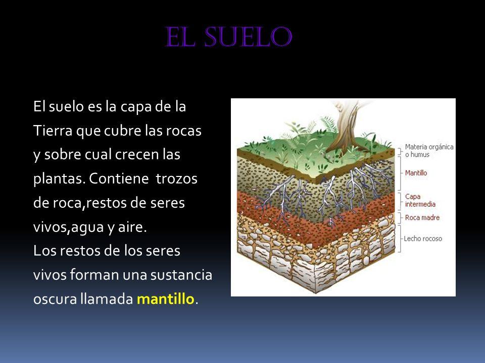 El suelo El suelo es la capa de la Tierra que cubre las rocas y sobre cual crecen las plantas. Contiene trozos de roca,restos de seres vivos,agua y ai