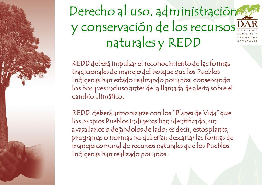REDD deberá impulsar el reconocimiento de las formas tradicionales de manejo del bosque que los Pueblos Indígenas han estado realizando por años, conservando los bosques incluso antes de la llamada de alerta sobre el cambio climático.