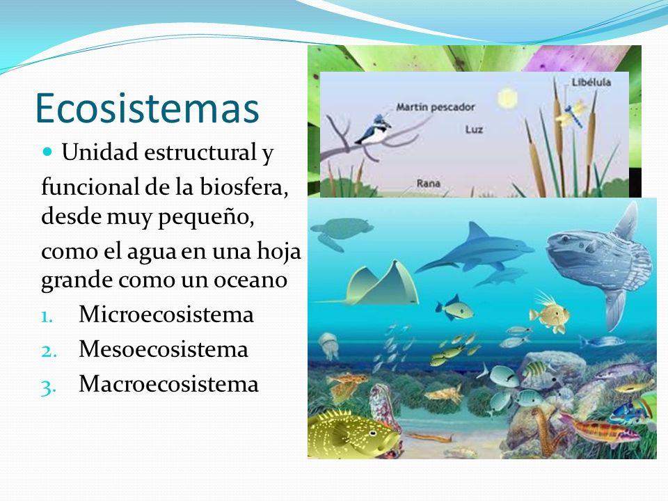 Ecosistemas Unidad estructural y funcional de la biosfera, desde muy pequeño, como el agua en una hoja o grande como un oceano 1. Microecosistema 2. M