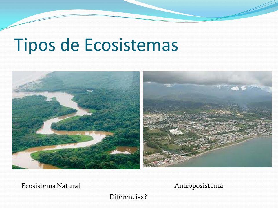 Tipos de Ecosistemas Ecosistema Natural Antroposistema Diferencias?