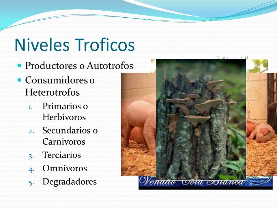 Niveles Troficos Productores o Autotrofos Consumidores o Heterotrofos 1. Primarios o Herbivoros 2. Secundarios o Carnivoros 3. Terciarios 4. Omnivoros