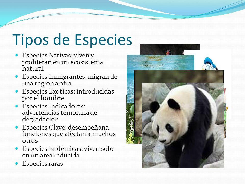 Tipos de Especies Especies Nativas: viven y proliferan en un ecosistema natural Especies Inmigrantes: migran de una region a otra Especies Exoticas: i