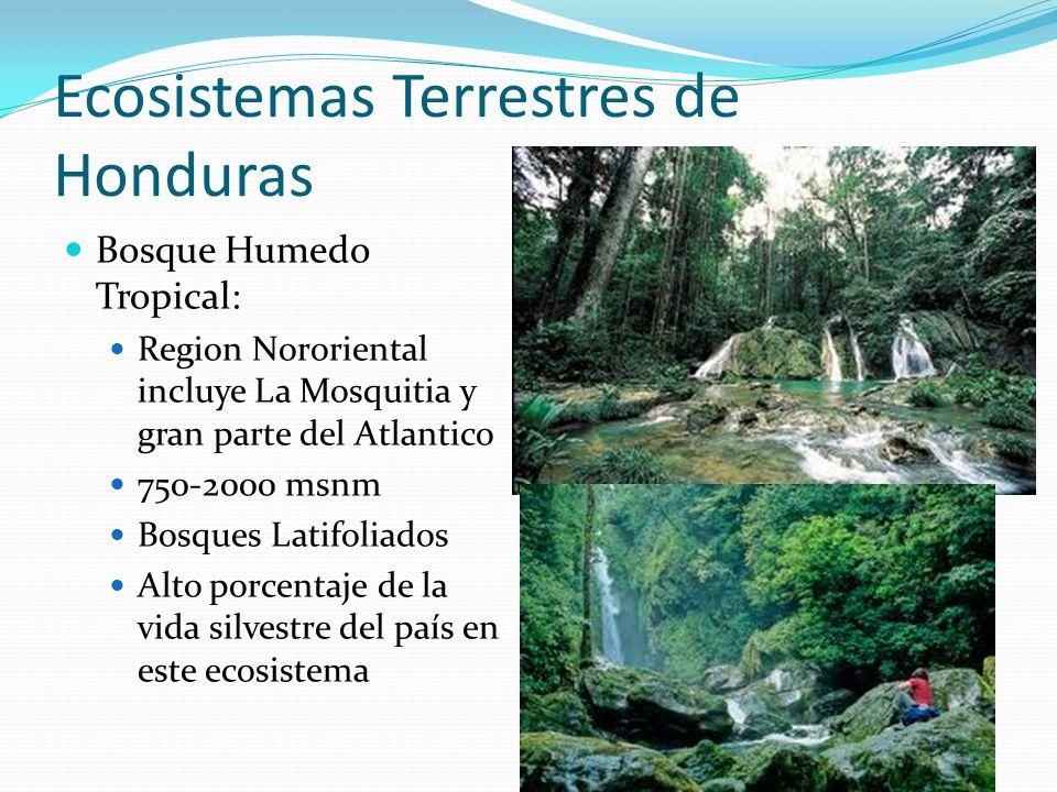 Ecosistemas Terrestres de Honduras Bosque Humedo Tropical: Region Nororiental incluye La Mosquitia y gran parte del Atlantico 750-2000 msnm Bosques La