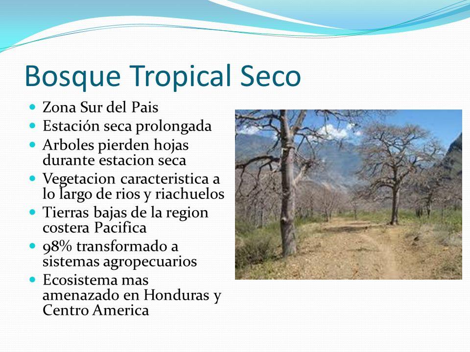 Bosque Tropical Seco Zona Sur del Pais Estación seca prolongada Arboles pierden hojas durante estacion seca Vegetacion caracteristica a lo largo de ri