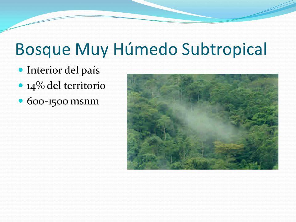 Bosque Muy Húmedo Subtropical Interior del país 14% del territorio 600-1500 msnm