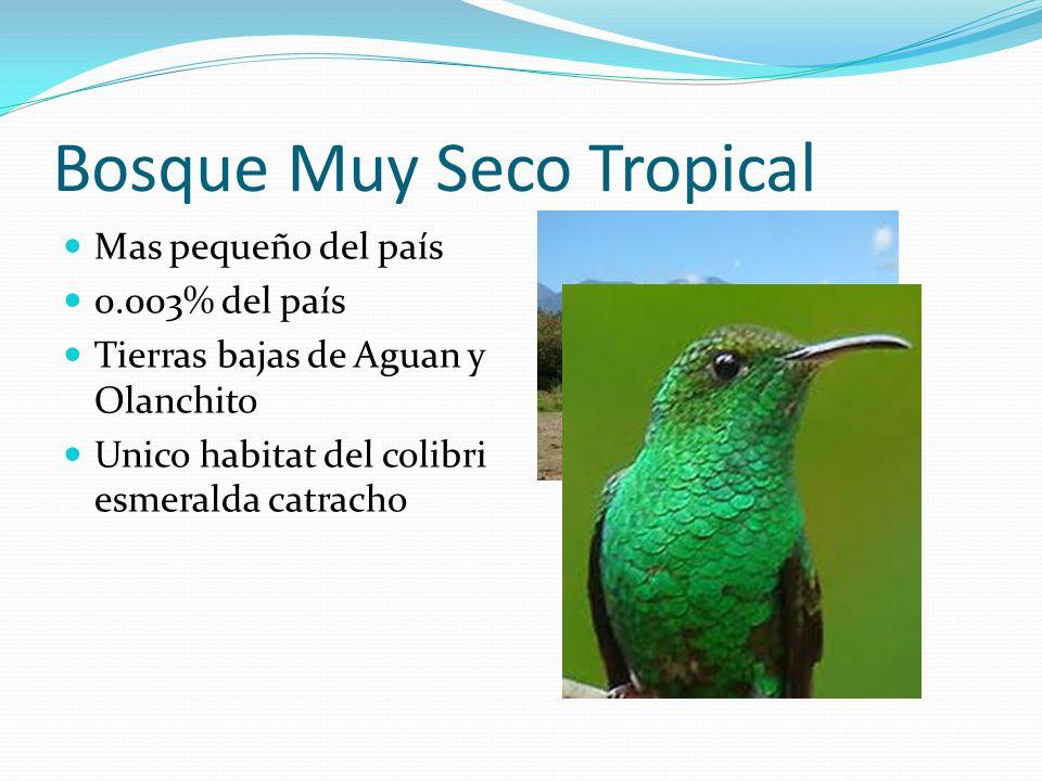 Bosque Muy Seco Tropical Mas pequeño del país 0.003% del país Tierras bajas de Aguan y Olanchito Unico habitat del colibri esmeralda catracho