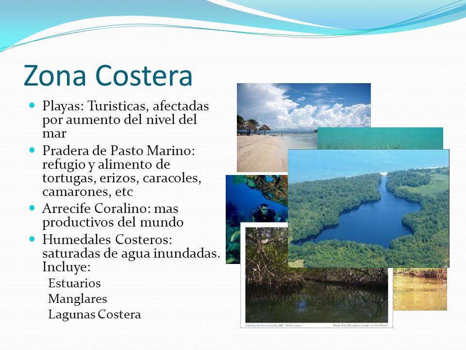 Zona Costera Playas: Turisticas, afectadas por aumento del nivel del mar Pradera de Pasto Marino: refugio y alimento de tortugas, erizos, caracoles, c