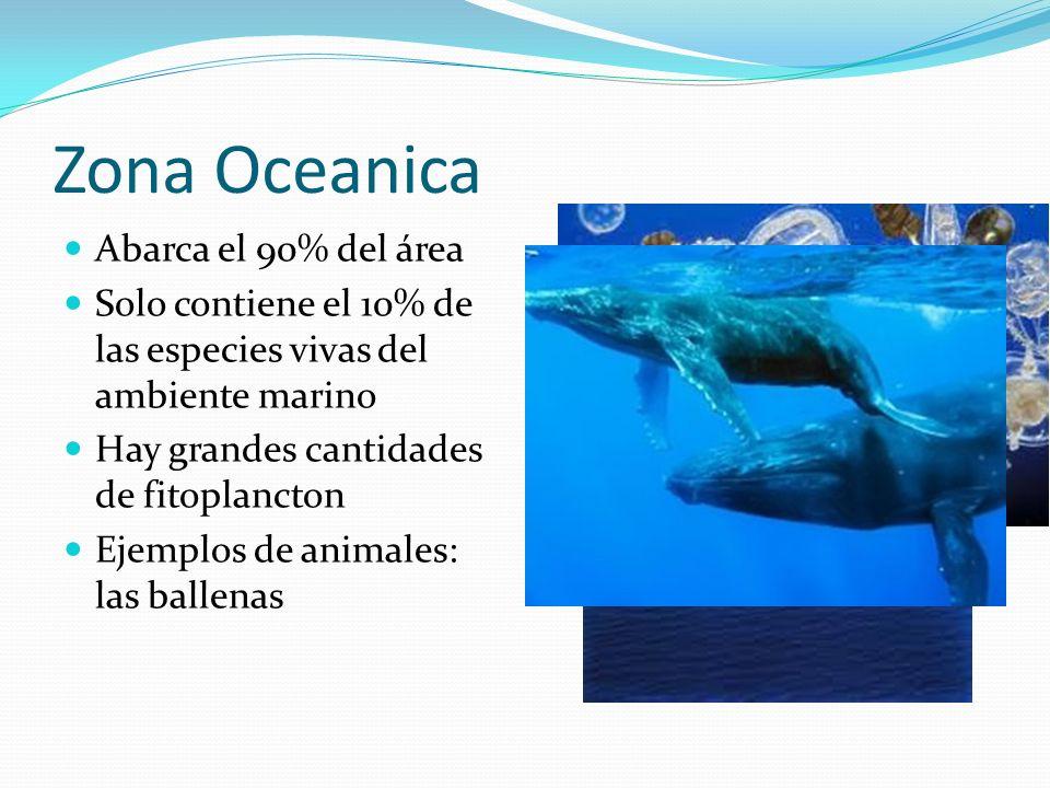 Zona Oceanica Abarca el 90% del área Solo contiene el 10% de las especies vivas del ambiente marino Hay grandes cantidades de fitoplancton Ejemplos de
