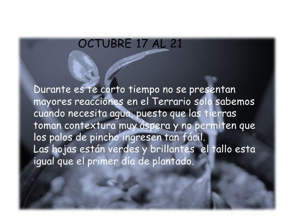 OCTUBRE 17 AL 21 Durante es te corto tiempo no se presentan mayores reacciones en el Terrario solo sabemos cuando necesita agua, puesto que las tierra