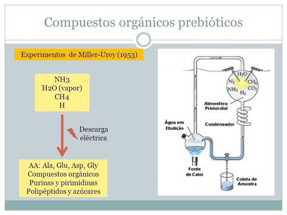 Compuestos orgánicos prebióticos Experimentos de Miller-Urey (1953) NH3 H2O (vapor) CH4 H Descarga eléctrica AA: Ala, Glu, Asp, Gly Compuestos orgánic