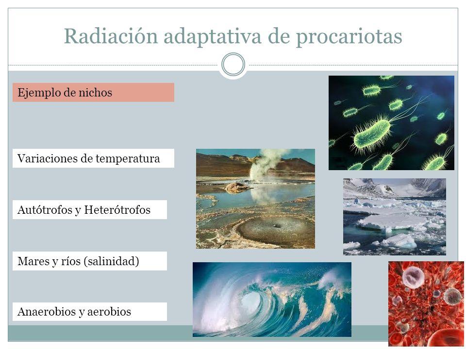 Radiación adaptativa de procariotas Ejemplo de nichos Variaciones de temperatura Mares y ríos (salinidad) Autótrofos y Heterótrofos Anaerobios y aerob