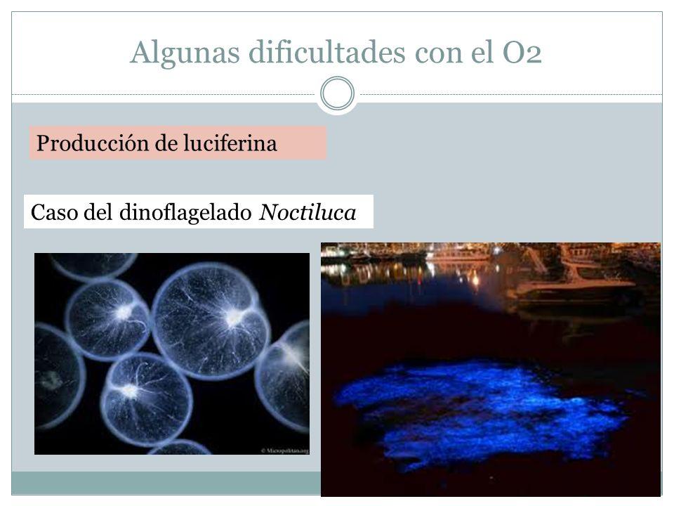 Algunas dificultades con el O2 Producción de luciferina Caso del dinoflagelado Noctiluca