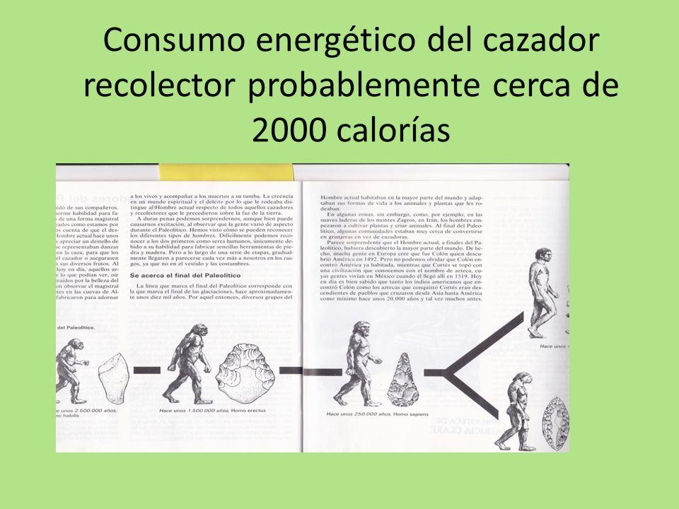 Consumo energético del cazador recolector probablemente cerca de 2000 calorías