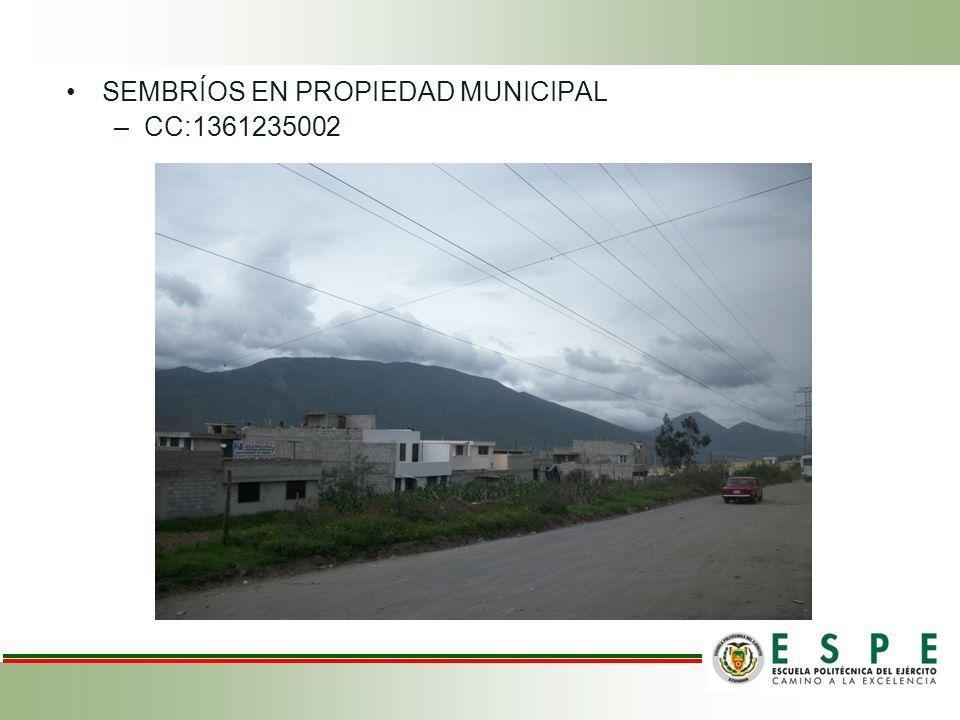 SEMBRÍOS EN PROPIEDAD MUNICIPAL –CC:1361235002