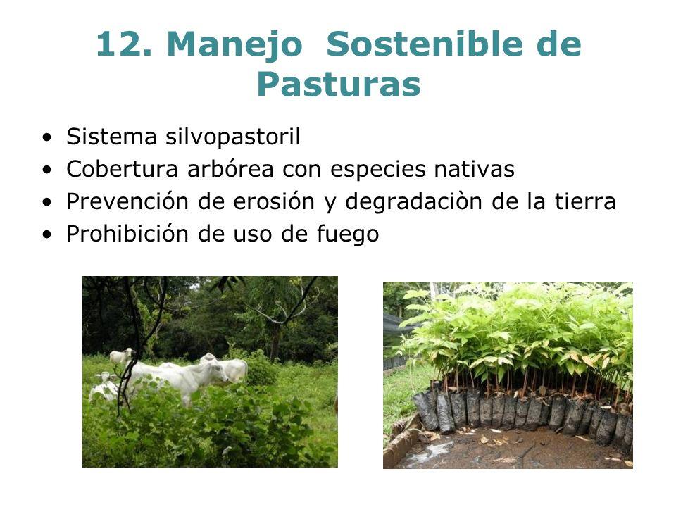 12. Manejo Sostenible de Pasturas Sistema silvopastoril Cobertura arbórea con especies nativas Prevención de erosión y degradaciòn de la tierra Prohib
