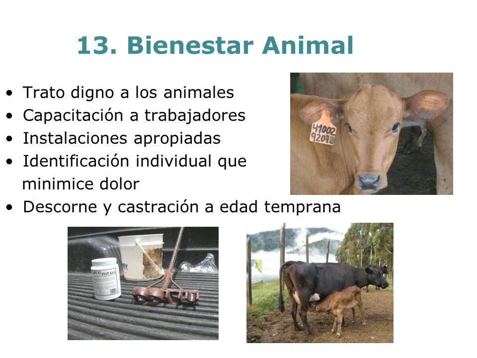 13. Bienestar Animal Trato digno a los animales Capacitación a trabajadores Instalaciones apropiadas Identificación individual que minimice dolor Desc