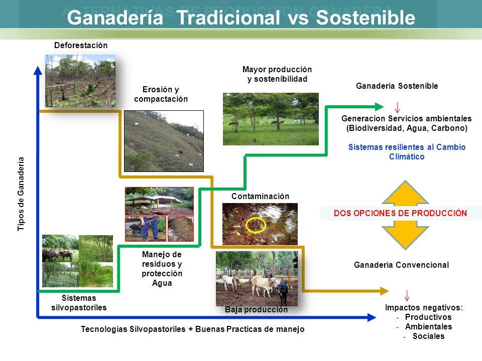 Tipos de Ganadería Tecnologías Silvopastoriles + Buenas Practicas de manejo Ganadería Convencional Impactos negativos: -Productivos -Ambientales -Soci