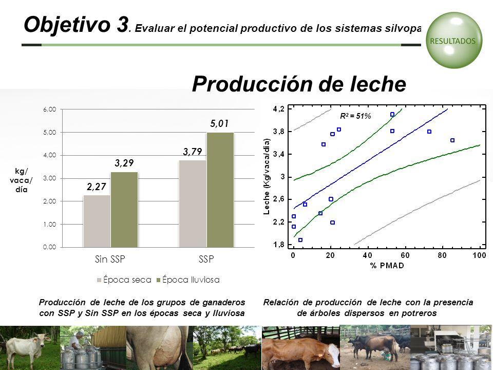 Producción de leche de los grupos de ganaderos con SSP y Sin SSP en los épocas seca y lluviosa Relación de producción de leche con la presencia de árb