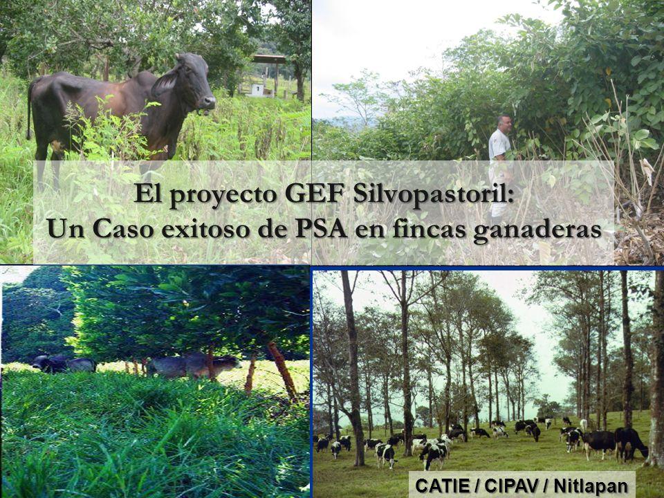 El proyecto GEF Silvopastoril: Un Caso exitoso de PSA en fincas ganaderas CATIE / CIPAV / Nitlapan