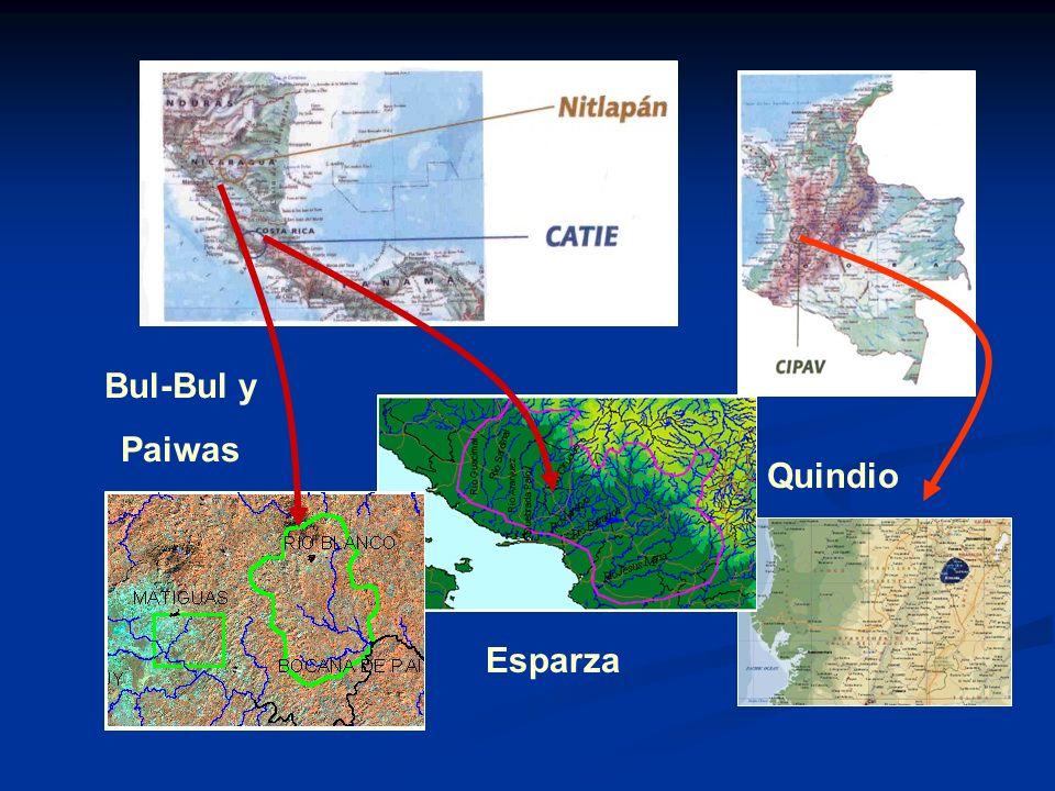 Quindio Esparza Bul-Bul y Paiwas
