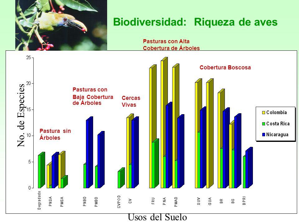 Cobertura Boscosa Pasturas con Baja Cobertura de Árboles Pastura sin Árboles Cercas Vivas Pasturas con Alta Cobertura de Árboles Biodiversidad: Riquez