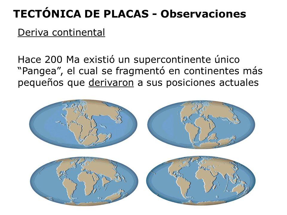 Deriva continental Hace 200 Ma existió un supercontinente único Pangea, el cual se fragmentó en continentes más pequeños que derivaron a sus posicione