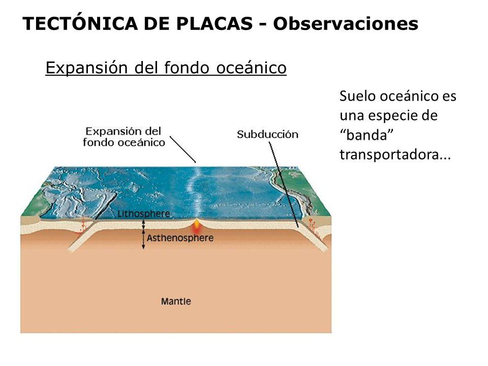 Expansión del fondo oceánico Suelo oceánico es una especie de banda transportadora... TECTÓNICA DE PLACAS - Observaciones