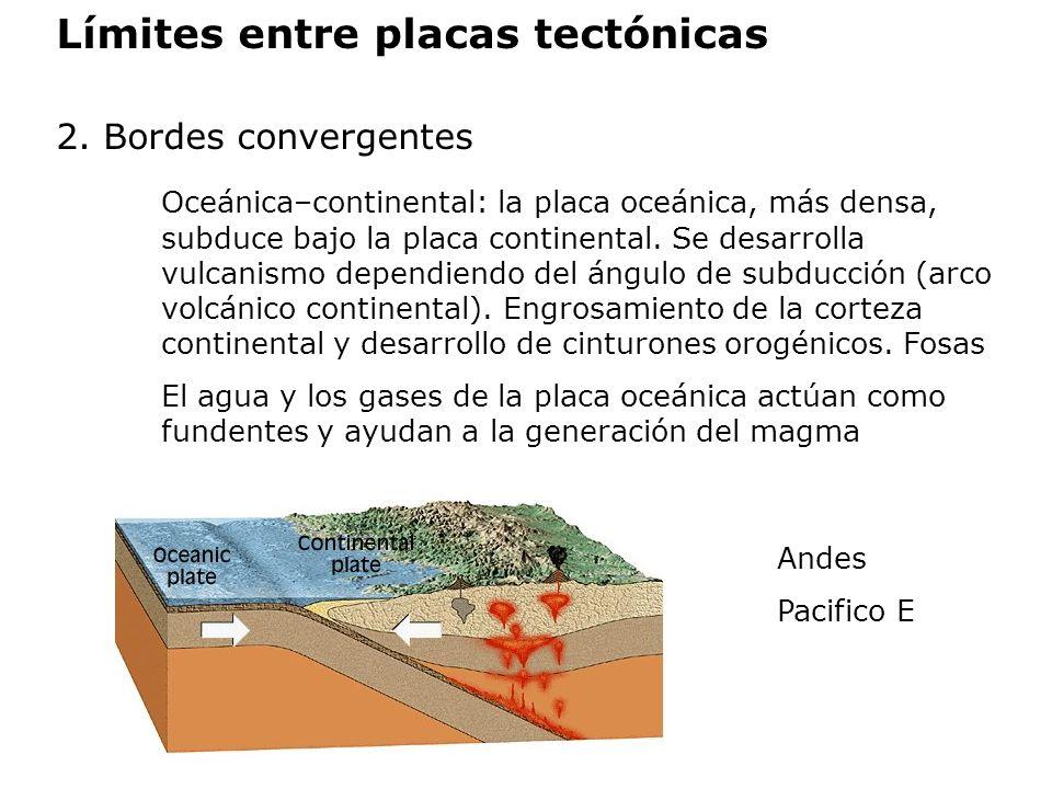 Límites entre placas tectónicas 2. Bordes convergentes Oceánica–continental: la placa oceánica, más densa, subduce bajo la placa continental. Se desar