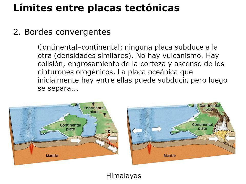 Límites entre placas tectónicas 2. Bordes convergentes Continental–continental: ninguna placa subduce a la otra (densidades similares). No hay vulcani