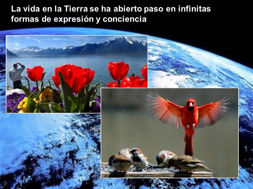 La vida en la Tierra se ha abierto paso en infinitas formas de expresión y conciencia