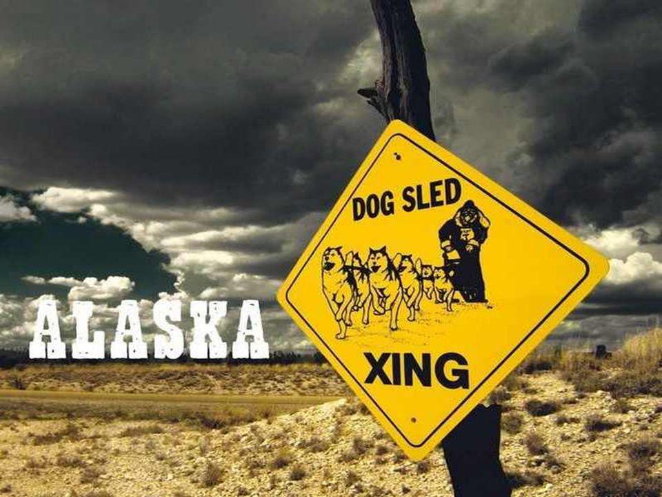 ALASKA (« continent » in het Inuit) is de grootste staat van de Verenigde Staten, met een totale oppervlakte van 1.717.854 km², ongeveer 54 maal die v