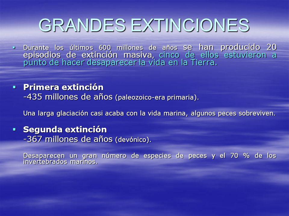 GRANDES EXTINCIONES Durante los últimos 600 millones de años se han producido 20 episodios de extinción masiva, cinco de ellos estuvieron a punto de h