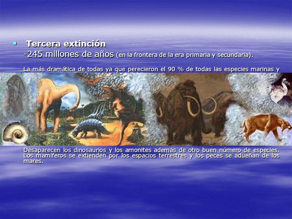 Tercera extinción Tercera extinción -245 millones de años (en la frontera de la era primaria y secundaria). La más dramática de todas ya que pereciero