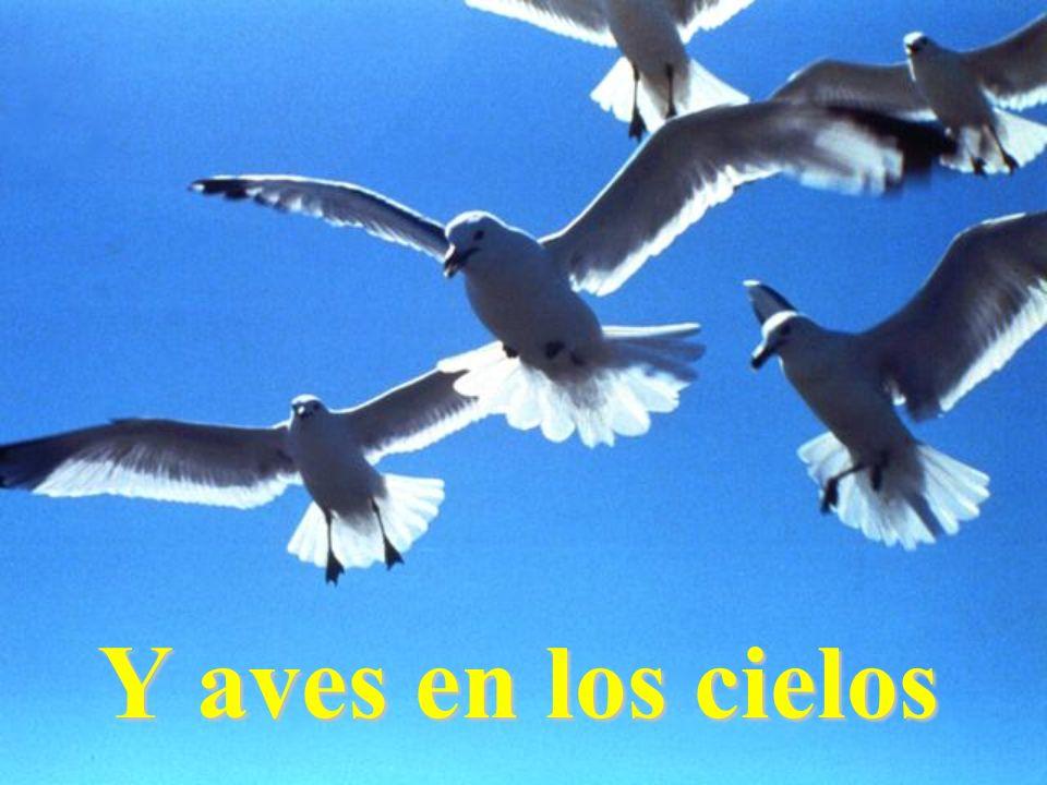Y aves en los cielos