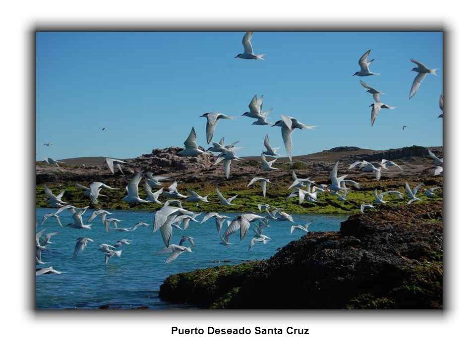 Punta Piramide Peninsula Valdes Chubut